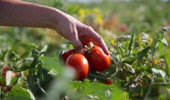 L'entreprise s'attache a nouer une relation particulière avec les agriculteurs