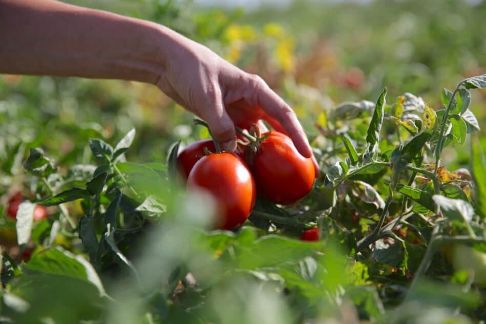 L'entreprise s'attache à nouer une relation particulière avec les agriculteurs