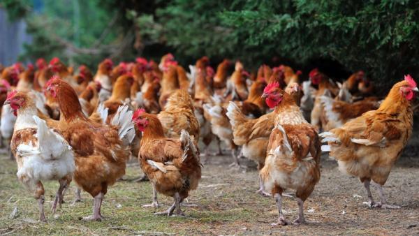 Le bien être animal et les enjeux sociétaux sont les futures clés de ce marché.